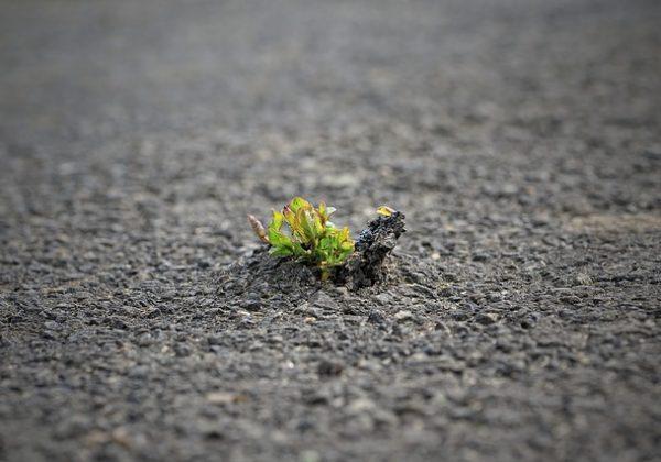 אימון אישי וגם אימון עסקי (קואצ'ינג) לפריצת דרך בחיים